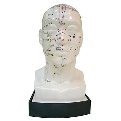 Akupunkturní model hlavy, 11 x 9 x 21 cm