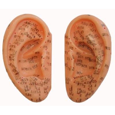 Akupunkturní model ucha, pár