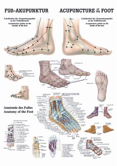 Akupunkturní zóny na nohou, 50 x 70 cm